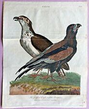 1804 Linnaeus/Sibly GRIFFARD EAGLE and BOATMAN Hand-Colored BIRDS COPPER Pl #2