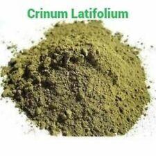 Crinum Latifolium Raw Powder 4 oz