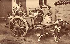 CPA - BELGIQUE - Attelage de chiens - Laitier flamand.