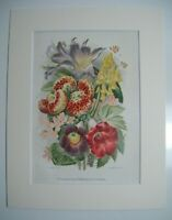 Antique c1880 Chromolithograph Botanical Floral Print ~ HERBACEOUS FLOWERS