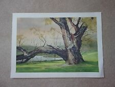 Set of 5 Prints by Marc Moon Akron Artist Willow Tree on Silver Lake Barber Farm