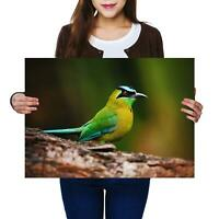 A2 | Blue Capped Motmot Crowned Bird Size A2 Poster Print Photo Art Gift #12499