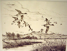 David Hagerbaumer  Sporting Artist Original signed etching Pintails (Sprig)