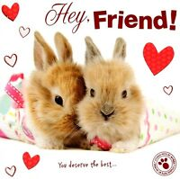 Hey Friend Cute Bunny Hoppy Valentine's Day Greeting Card Studio Pets Cards