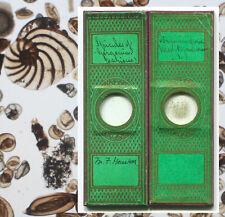 2 Green Papers - Foraminifera & Gorgonia - Microscope Slides