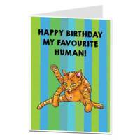 Funny Cat Birthday Card For The Owner Lover Crazy Lady Perfect For Husband Wife
