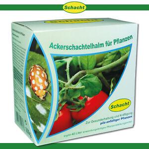 Schacht 200 g Ackerschachtelhalm für Pflanzen Stärkung Pilze Gemüse Blumen Obst