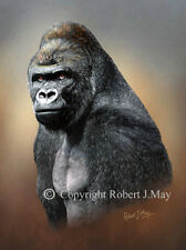 Limited Edition of 50 Gorilla Head Study Prints by Robert J. May