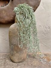 Artificial Trailing Tillandsia Spanish Moss, Green Faux Succulent Plant GI