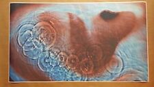 """Pink Floyd GIANT WIDE 24"""" x 42"""" Meddle Poster Roger Waters Concert Trip Band"""