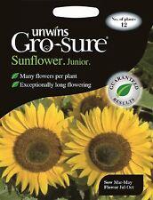 Unwins Pictorial Packet - Flower - Sunflower Junior F1 - 12 Seeds