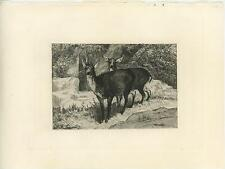 ANTIQUE BUCK STAG DEER DOE LOVE PAIR WOODS TREES OLD ORIGINAL ETCHING ART PRINT