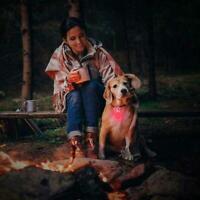 LED Dog Tag Collar Light Up Pet Puppy Flashing See Night Dark Disc Hot C7K8