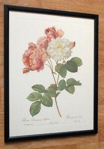Redoute Botanical Set, 12''x16'' framed redoute prints, vintage botanical art