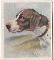 Pointer Dog Pet Animal Canine c80 Y/O Trade Ad Card