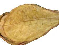 20 feuilles de catappa entretient aquarium poisson - catappa-leaves