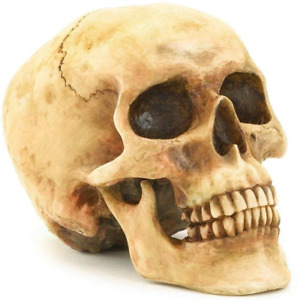 Realistic Human Skull Replica Resin Life Size Model Anatomical Gothic Decoration