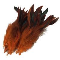 PF 50 Beautiful cock feathers 12-18cm / 4-7inch orange