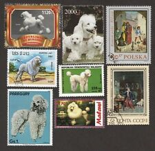 WHITE POODLE **Int'l Dog Stamp Collection** Great Gift**Toy, Miniature,Standard