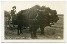 RPPC South Dakota Early Transportation Lady Driving Buffalo Bison Drawn Buggy