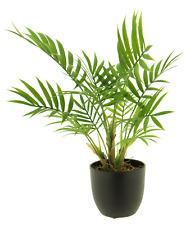 Artificial palme Chamaedorea verde en maceta arte planta dekopflanze h:ca.36cm