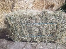 QUALITY SMALL BALES OF HAY PETS SMALL ANIMAL ETC APPROX . 12kg INC P & P