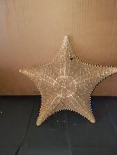 Starfish Taxidermy