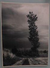 PHOTO D'ART DE 1962 . ARBRE . L'ORAGE DE G.TEISENTZ .29x39 cm. SNAPSHOT VINTAGE