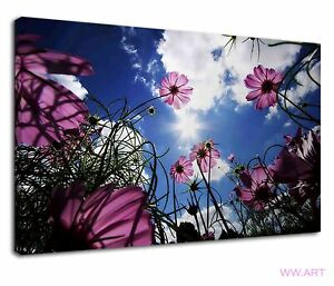 Lovely Pink Cosmos And Bright Blue Sunny Sky Canvas Wall Art Picture Print