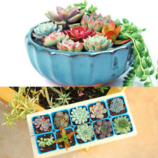 Rare Succulents Seeds Office Plant Mixed Potted Flower Seeds Bonsai Seeds 200pc
