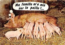 BF39460 une belle mere  pig couchon   animal animaux