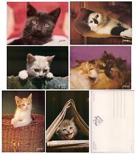 Set lot 6 pcs CAT Kitten PC post card 1960-1990th feline unused France LOVELY!