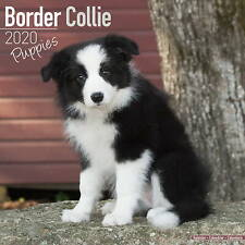 Border Collie Puppies Calendar 2020 Premium Dog Breed Calendars