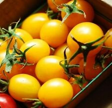 150 PLUM YELLOW TOMATO Lycopersicon Heirloom Indeterminate Fruit Vegetable Seeds