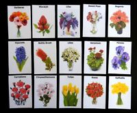 Dementia Activity Memory Matching Pairs (Flowers) Picture Cards and playing snap