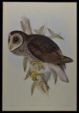 "John Gould Sooty Owl Bird Limited Edition Print 21"" x 14.5"""