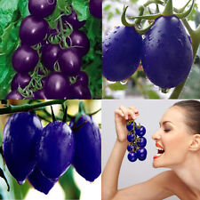 20 Seeds Purple Cherry Tomato Organic Heirloom Garden Fruit Vegetable Plant Seed