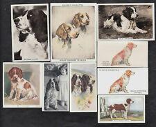 9 Different Vintage WELSH SPRINGER SPANIEL Tobacco/Cigarette Dog Cards