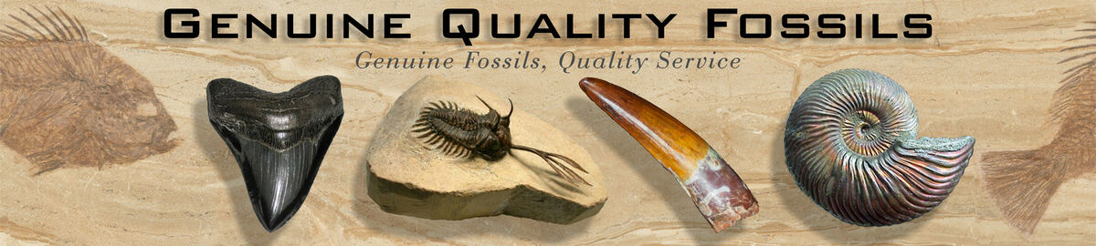 Genuine Quality Fossils