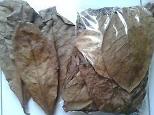 Betta Almond Leave Catappa in 1000 g Dried A+++ Indian Katapang Bengal Tropical