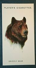 GRIZZLY BEAR   Original 1931 Vintage Colour Portrait Card   Unmounted