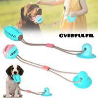 Pet Dog Molar Chew Selbstspielender Ball mit Saugnapf zur Zahnreinigung