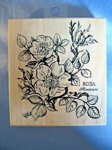 Rosa Rosaceae Botanical Latin Wood-Mount Rubber Stamp K-036 PSX RARE!