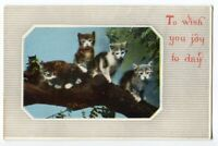 101320 VINTAGE CAT POSTCARD FOUR LITTLE KITTENS ON A TREE TO WISH YOU JOY TODAY