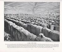 1897 Vittoriano Stampa ~ Australiano Lana Show Camera ~ Forti ( Testo