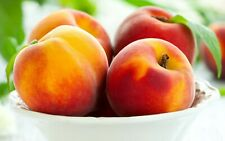 Sweet Peach 3 Pcs Summer Seeds Autumn Red Tree Fruit Home Garden Planting