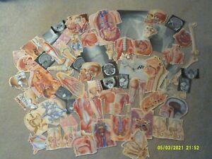 (5*4A)vintage EPHEMERA paper CRAFTING lot-ANATOMY scrapbooking ART collage