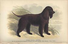1886 Art Named Dog Print + Chapter Uk Dalziel British Dogs Irish Water Spaniel