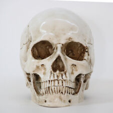 Realistic Life Size Human Anatomy Resin Replica Skull Head Halloween Party Decor
