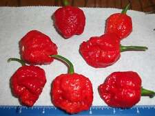 7 Pot Brain Strain, Red Hot Pepper, 25 Seeds From Organically Grown NON GMO